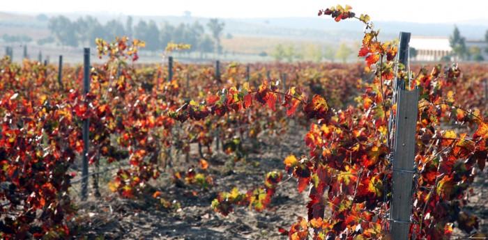 Las claves del branding en el mundo del vino