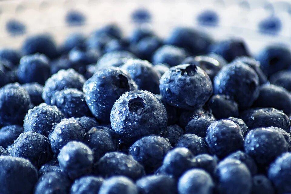 los fitonutrietnes y la salud