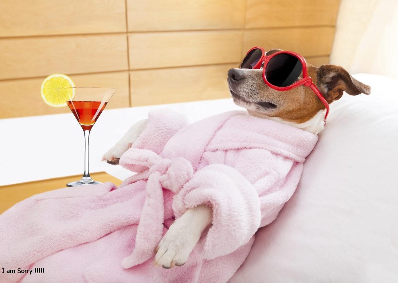 hoteles para mascotas